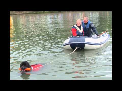 RNLI Fun Day 2012 - The Scottish Newfoundland Club | PopScreen