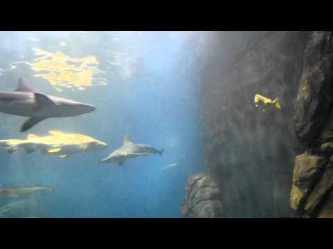 Shark Tank New Jersey 39 S Aquarium Popscreen