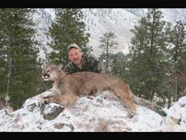 Cougar Hunting Movie