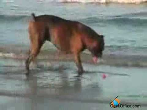Dog Wont Obey Owner.flv | PopScreen