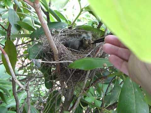 Feeding a baby bird | PopScreen