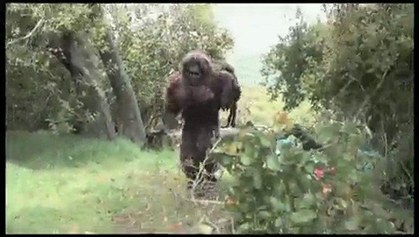 California Bigfoot Sightings