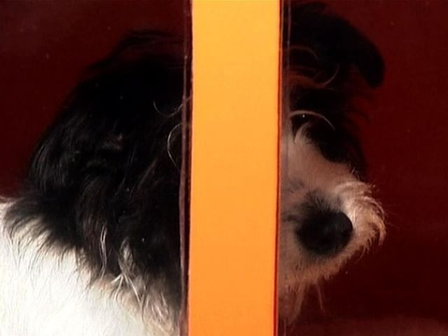 Soundproof dog kennel popscreen for How to soundproof a dog kennel